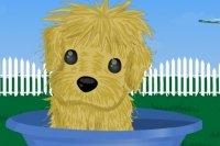 Cucciolo in Cerca di Padrone