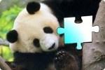 Il puzzle del panda