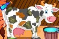 Prenditi cura della mucca