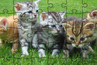 Puzzle dei Gatti