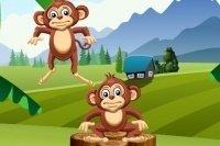 Scimmie impilate